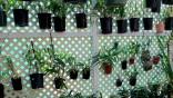 orchid, orchids, cymbidium, south east Melbourne, Melbourne, orchid clubs, orchid societies, OSCOV, orchid photos, orchid care, orchid pictures, orchid images, orchid shows, orchid newsletters, orchids on Facebook, orchids of Twitter, Moorabbin, Bentleigh, Brighton, Hampton, Sandringham, Black Rock, Beaumaris, Bayside Council, Bayside district, Kingston, Bayside Melbourne, SE Suburbs, Parkdale, Mordialloc, Carnegie, Cheltenham, McKinnon, Highett, Oakleigh, Clarinda, Heatherton, Clayton, Dingley, Elsternwick, Caulfield, Ormond, Glenhuntley, Murrumbeena,