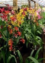 Visit to Mt Beenak Orchid nursery