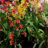 Visit to Mt Beenak Orchid nursery