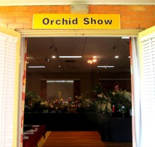 orchid, orchids, cymbidium, south east Melbourne, Melbourne, orchid clubs, orchid societies, OSCOV, orchid photos, orchid care, orchid pictures, orchid images, orchid shows, orchid newsletters, orchids on Facebook, orchids of Twitter, Moorabbin, Bentleigh, Brighton, Hampton, Sandringham, Black Rock, Beaumaris, Bayside Council, Bayside district, Kingston, Bayside Melbourne, SE Suburbs, Parkdale, Mordialloc, Carnegie, Cheltenham, McKinnon, Highett, Oakleigh, Clarinda, Heatherton, Clayton, Dingley, Elsternwick, Caulfield, Ormond, Glenhuntley, Murrumbeena,
