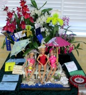 Miniature Display 2nd Prize, orchid, orchids, cymbidium, cymbidium kimberly splash, tee pee, south east Melbourne, Melbourne, orchid clubs, orchid societies, OSCOV, orchid photos, orchid care, orchid pictures, orchid images, orchid shows, orchid newsletters, orchids on Facebook, orchids of Twitter, Moorabbin, Bentleigh, Brighton, Hampton, Sandringham, Black Rock, Beaumaris, Bayside Council, Bayside district, Kingston, Bayside Melbourne, SE Suburbs, Parkdale, Mordialloc, Carnegie, Cheltenham, McKinnon, Highett, Oakleigh, Clarinda, Heatherton, Clayton, Dingley, Elsternwick, Caulfield, Ormond, Glenhuntley, Murrumbeena,