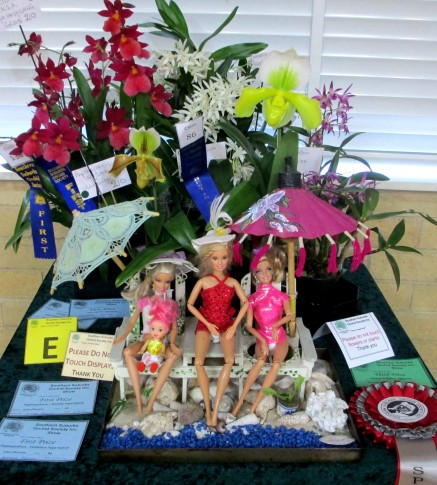 Miniature Display 2nd Prize, orchid, orchids, cymbidium, cymbidium kimberly splash, tee pee, south east Melbourne, Melbourne, orchid clubs, orchid societies, OSCOV, orchid photos, orchid care, orchid pictures, orchid images, orchid shows, orchid newsletters, orchids on Facebook, orchids of Twitter, Moorabbin, Bentleigh, Brighton, Hampton, Sandringham, Black Rock, Beaumaris, Bayside Council, Bayside district, Kingston, Bayside Melbourne, SE Suburbs, Parkdale, Mordialloc, Carnegie, Cheltenham, McKinnon, Highett, Oakleigh, Clarinda, Heatherton, Clayton, Dingley, Elsternwick, Caulfield, Ormond, Glenhuntley, Murrumbeena,